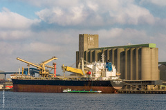 FIRST FRENCH GRAIN SHIP TO CHINA FOR 9 YEARS - Vignet